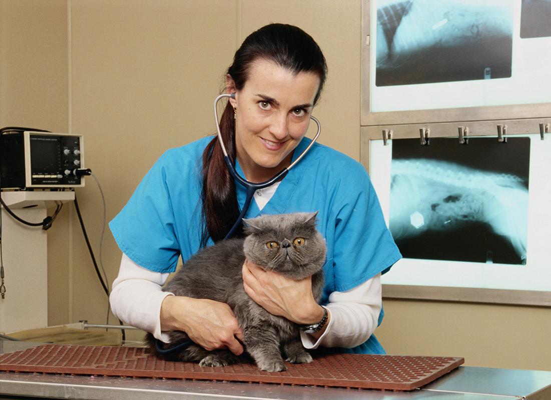 Veterinarian: Occupations in Alberta - alis